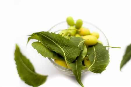 Neem fruit or nim fruit or Indian lilac fruit in a glass bowl isolated on white along with some fresh leaves also. Фото со стока