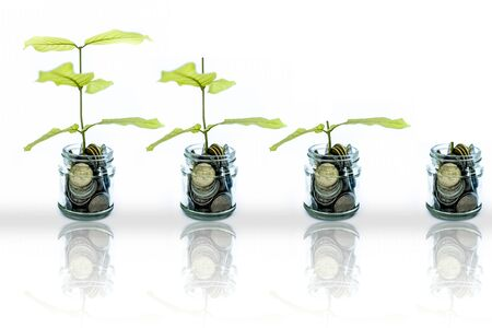 A glass jar full of coins and plant growing through it. Concept of savings, interest, fixed deposits, pension, social security cheque, Isolated on white with reflection also.