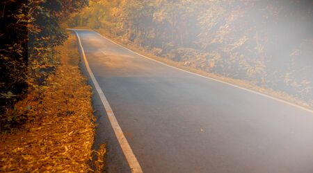 Panoramic shot autumn fall with beautiful infinite roads and a beam of light from canopy also. Reklamní fotografie