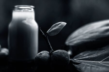 Close up shot of Banyan Tree Extracted Tincture in a transparent glass bottle on black glossy surface along with ripe and raw fruits of a banyan tree. Horizontal shot.