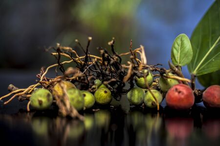 Close up shot of cut aerial roots of banyan tree along with its raw and ripe fruits on a black glossy surface. Aerial roots are used in the remedy of Tooth decay. Horizontal shot & blurred background.;