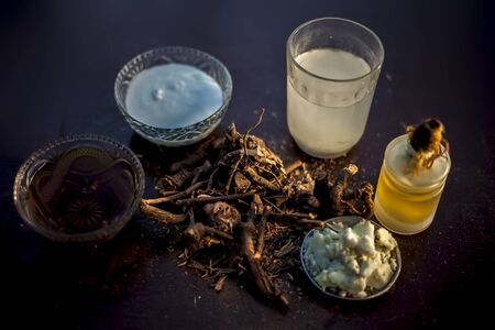Raw ayurvedic herb chitrak/Plumbago zeylanica roots on the brown-colored shiny surface with some buttermilk, ghee or clarified butter, its extract, curd, and honey with it used in ayurvedic therapy. Stock Photo