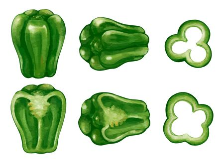 Illustration of greenpeppers sliced peppers cut in half Vetores