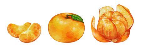 Illustration of Mandarin Orange