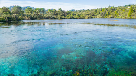 One of the world's clearest waters Waikoropup? Springs, New Zealand