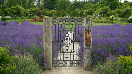 Closed steel gate in lavender farm, New Zealand