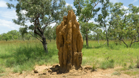 A huge termite mound found in Northern Australia Stock Photo