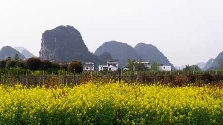 Typical chinese countryside with rapeseed fields along Li River, China