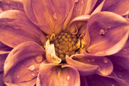 blossom beauty photo