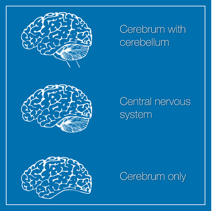 cns: Brain Illustration