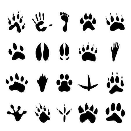 animal foot: Collection of 20 animal and human footprints