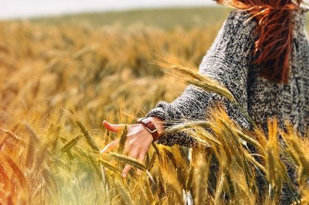 young woman hand in a wheat field as harvest concept outdoor Foto de archivo
