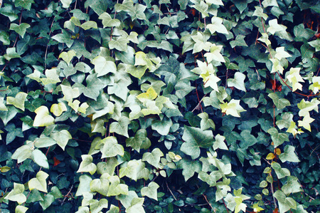 saturated: green saturated leaves background Stock Photo