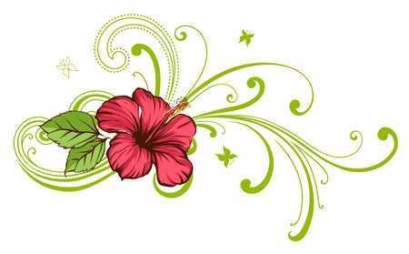 red hibiscus flower: Tropical flower Illustration