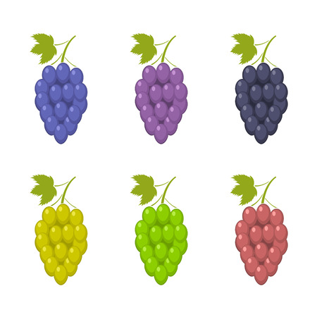 Bunche of grape set Illustration