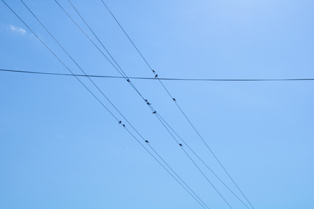 Village. Rural. Birds on wires in the sky over the village. Stock Photo
