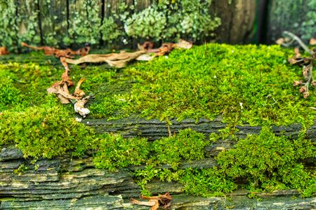 Green moss on a tree. Stock Photo