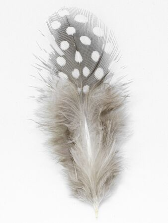 Beautiful feather rare bird close-up on the white background.