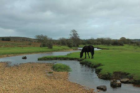 Horse grazing near river photo