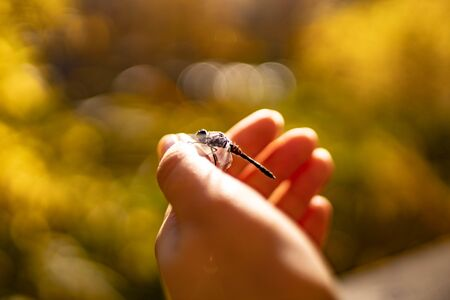 Dragonfly on a female hand. Insect on human hand