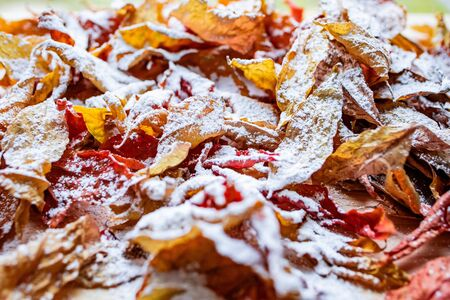 Bright colored autumn leaves covered with a thin layer of snow Фото со стока