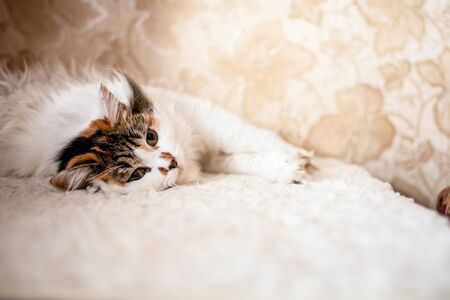 little white kitten lies on a bed against a patterned wall 스톡 콘텐츠