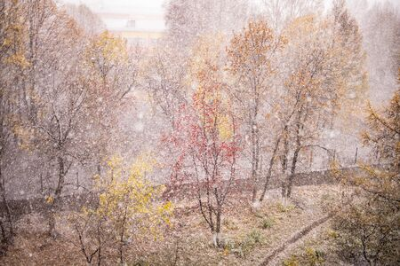 Autumn nature. First snow. Heavy snow flakes falling on autumn trees in the forest Фото со стока