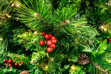 coniferous green forest. Christmas tree branches with red berries. Фото со стока