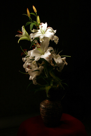 flower of a white lily on a black background in a vase