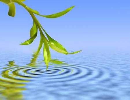 Bamboo feuilles sur l'eau bleue Banque d'images