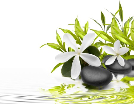 Wet stones with a green leafs and flowers in the water Stock Photo
