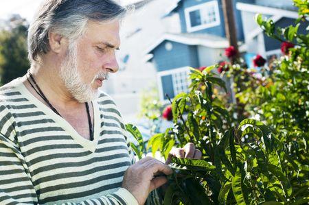 Portrait d'un homme mûr, qui travaillent dans le jardin