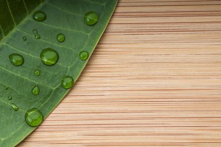 Green leaf with rain droplets on the bamboo background.  Macro with copy space