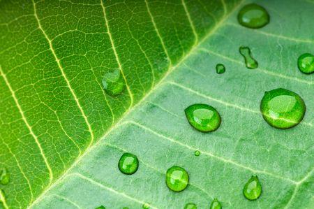 Vert feuille avec des gouttelettes de pluie