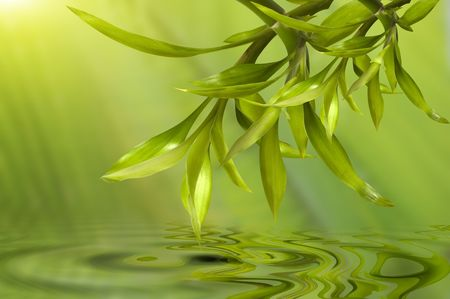 Spa still life, with bamboo leafs reflecting in the water Banque d'images