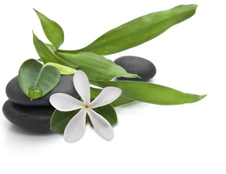 Stones with green leafs and white flower on the white background