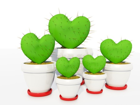 Green cactus as heart isolated on white photo