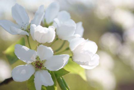 Spring flower background photo