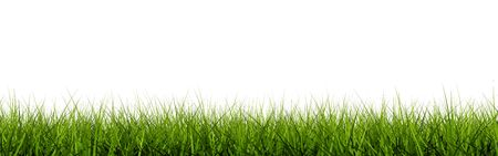 Grass closeup isolated on white Stock Photo - 6686175