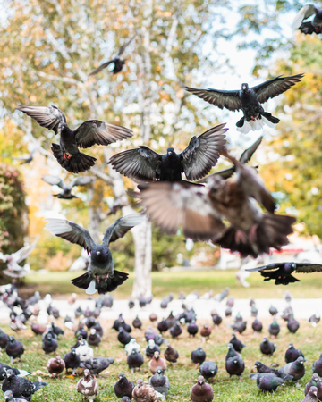 Group of flying pigeons in a park Stock Photo