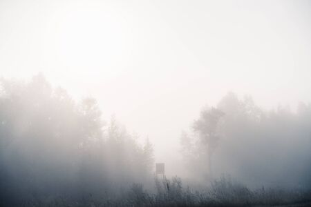 Foggy morning. Trees in a heavy fog in the morning. Russia Stock Photo