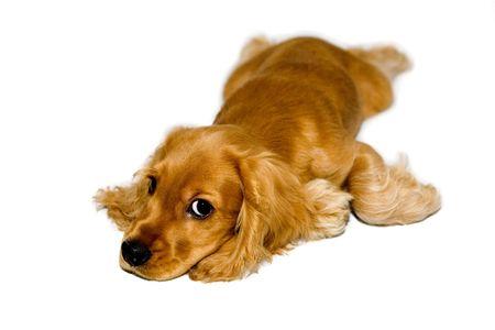 Puppy Stock Photo - 1826784