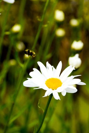 flower and bee photo