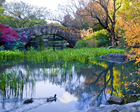 Central Park, New York  Beautiful park in beautiful city   photo