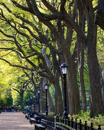 The Mall at Central Park durante el tiempo de ca�da