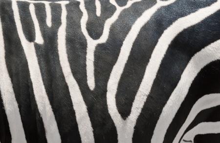 Zebra's Strepen