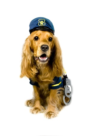 bloodhound: Cocker spaniel - cop Stock Photo