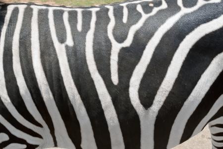 Zebras Stripes Reklamní fotografie