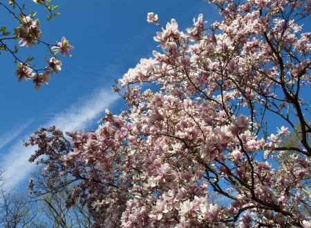 Blooming trees in Lafoet park Washington DC Stock Photo - 15579962