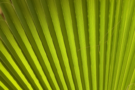 Texture of palm leaves in natural light. photo